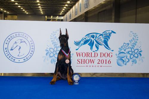 World Dog Show-2016