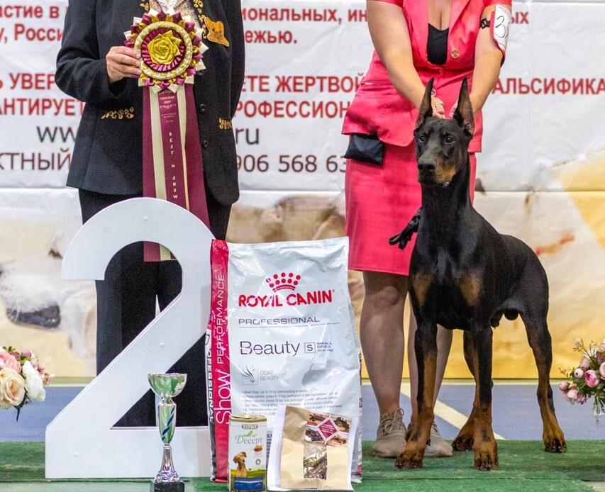 05.09.2020 National CAC-Show, Orel (Russia)🇷🇺 Judge I. Pirogova