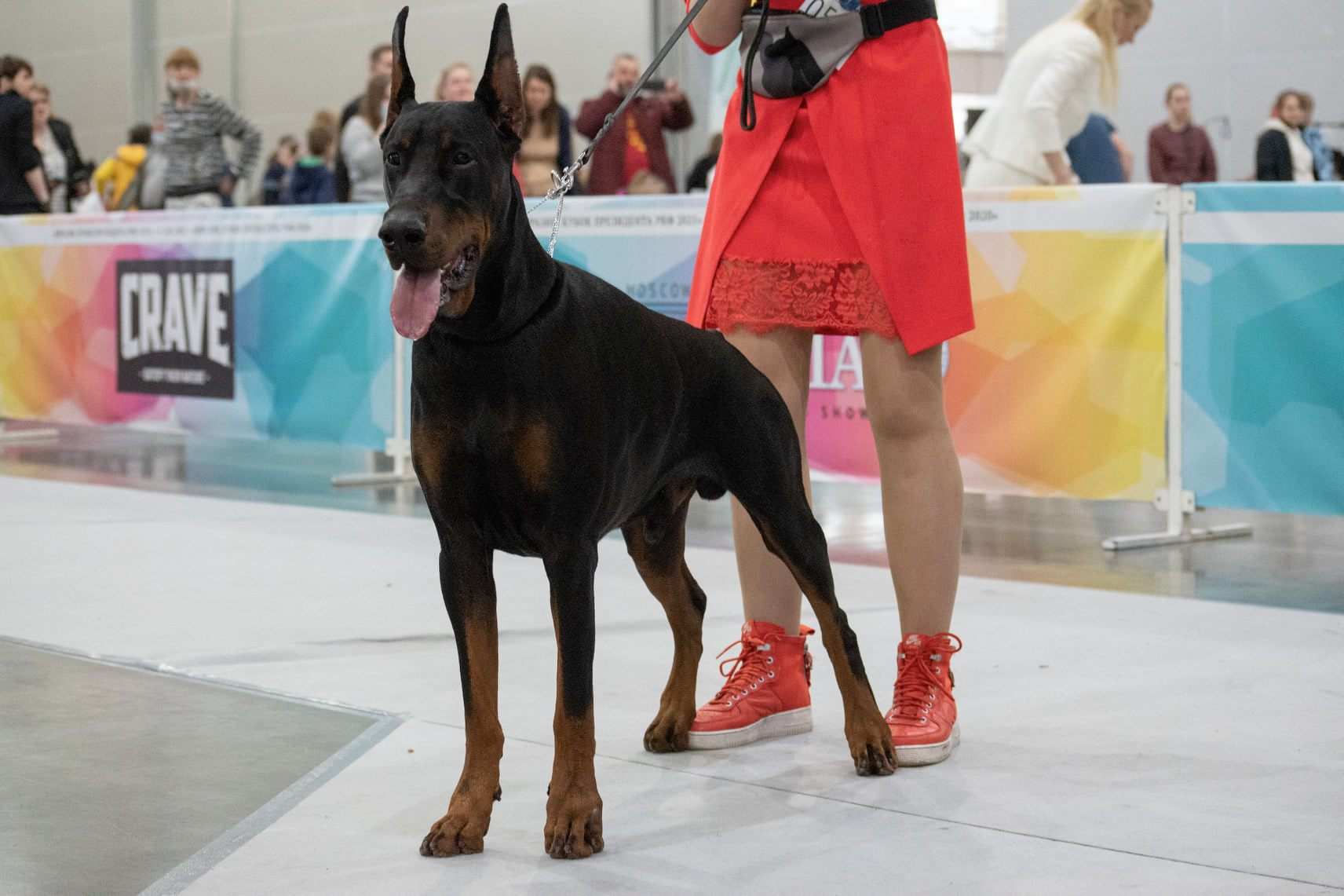 """01.05.2021   CACIB EURASIA """"Moscow The President of RKF Cup"""""""