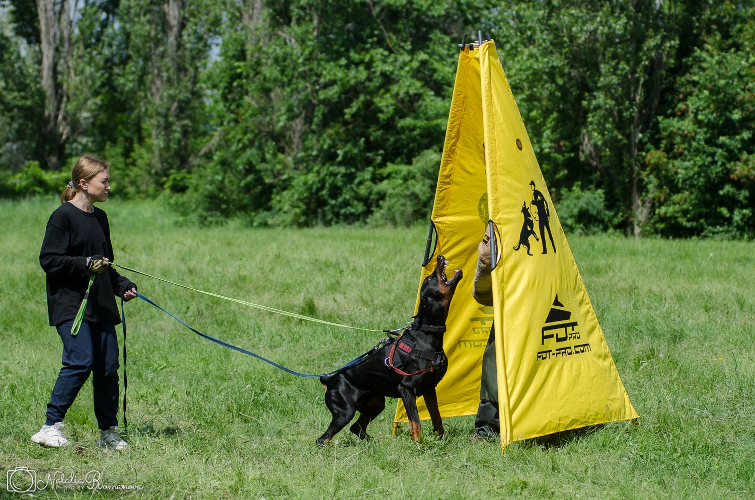 Protection training video Smart Wood Hills Storm Mufasa (Asterix del Nasi x SWH Kenya) — 17 months