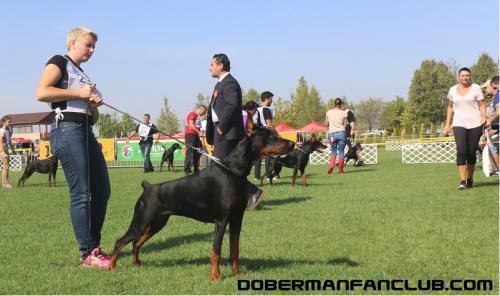 IDC-2017, Венгрия