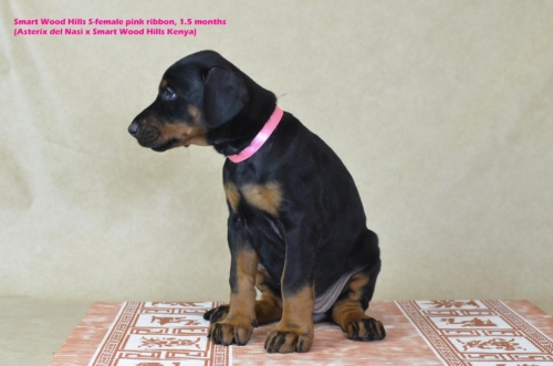 Сука розовая/ Pink female